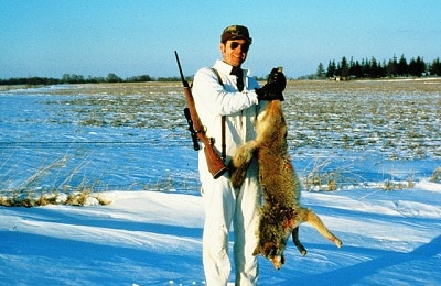 How to trap a coyote What to avoid